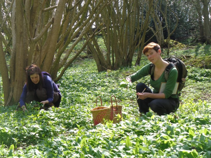 tips for foraging | south east | Kent | London
