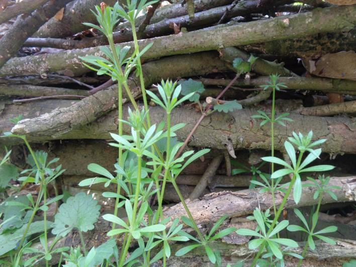 woodland herbal teas | bushcraft | Kent | south east | London