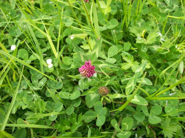 woodland herbal teas   bushcraft   Kent   south east   London