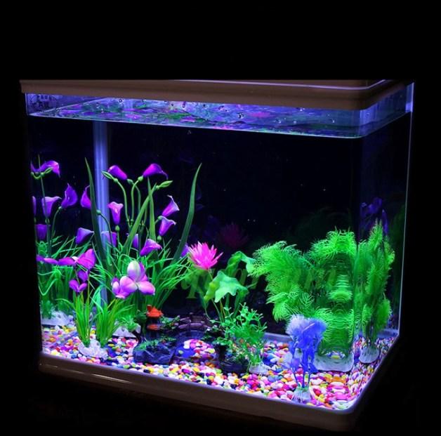 pebbles in aquarium
