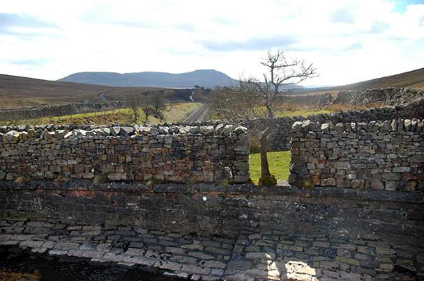 Tree in wall, Blea Moor, near Whernside