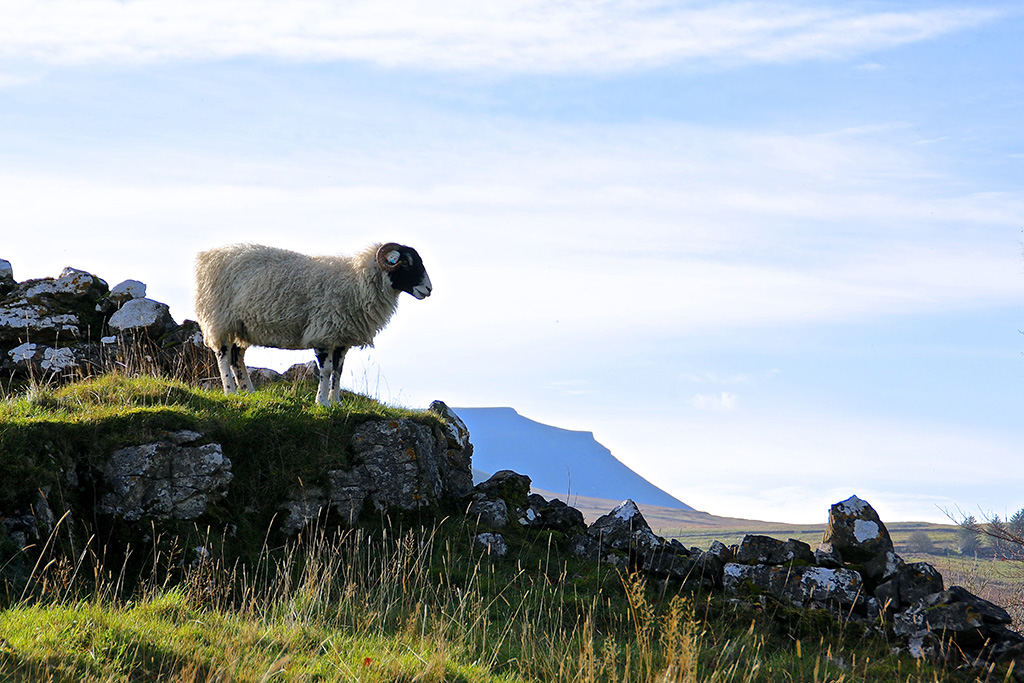 Posing in front of Ingleborough