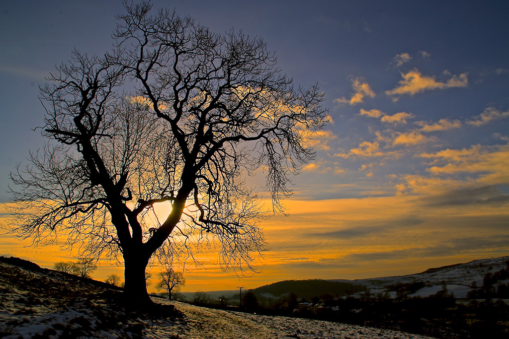 Tree at sunset near Langcliffe, Ribblesdale