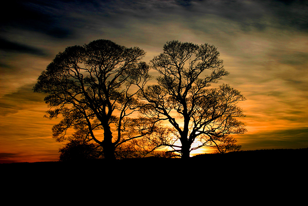 Twin trees at sunset, Long Preston, Ribblesdale