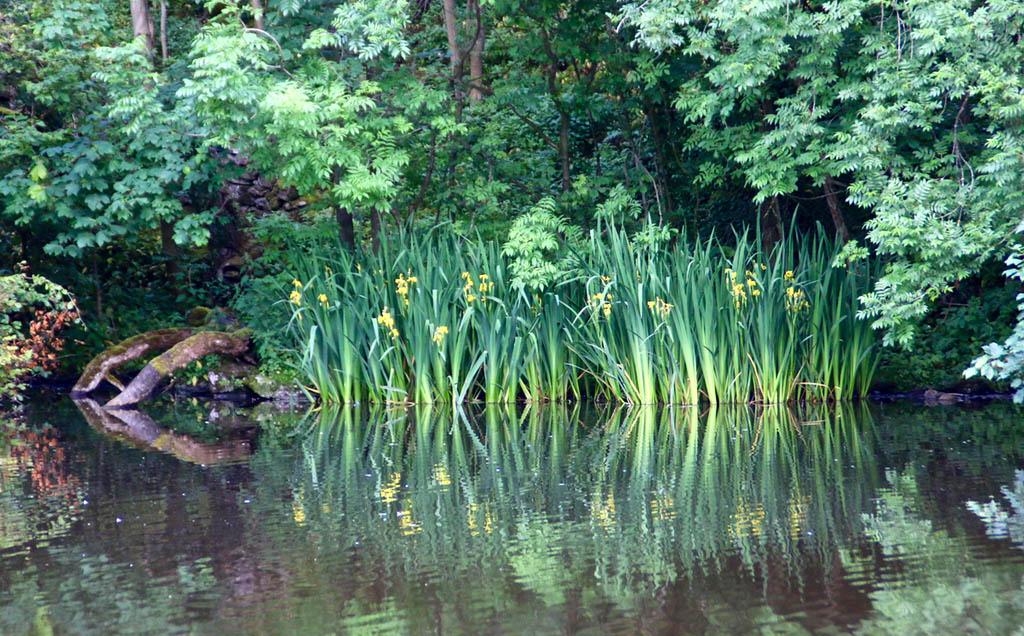 Iris Langcliffe Mill