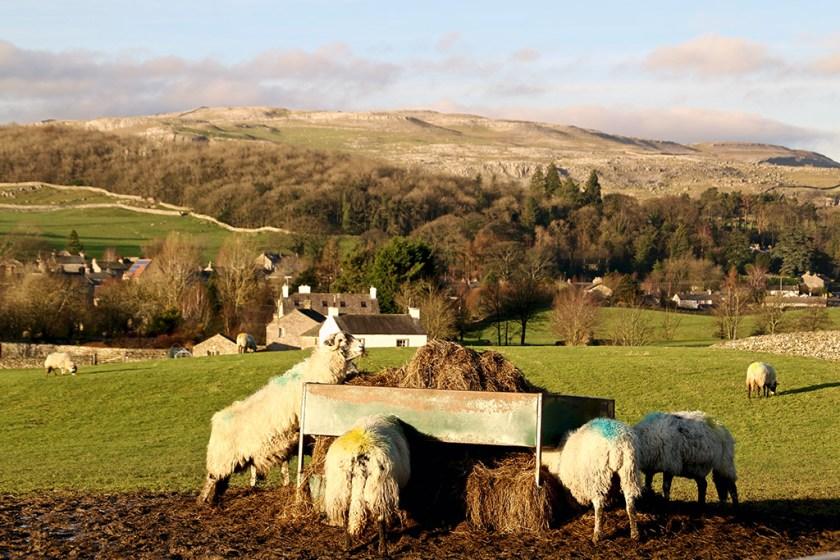sheepaustwick