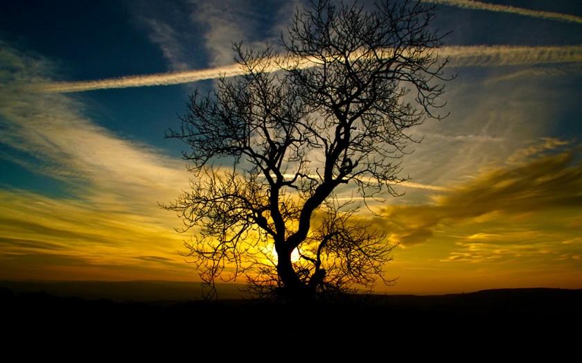 yorkshire trees winskill