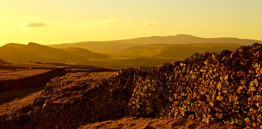 Yorkshire yellow