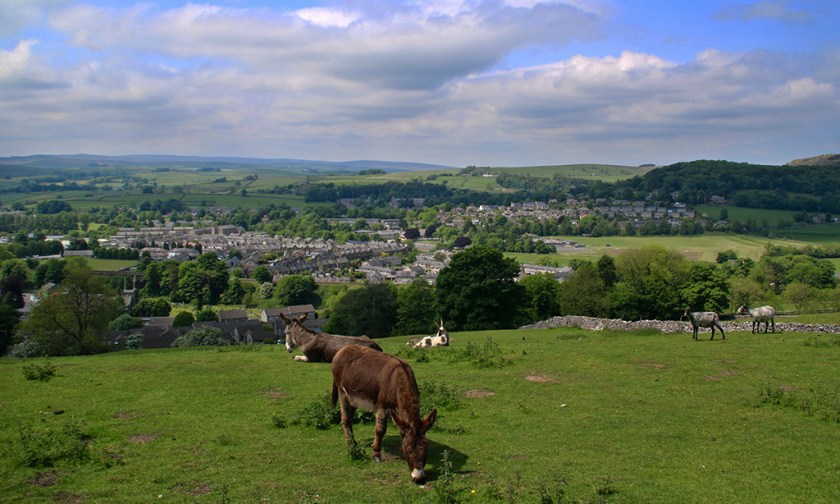 Ribblesdale animals