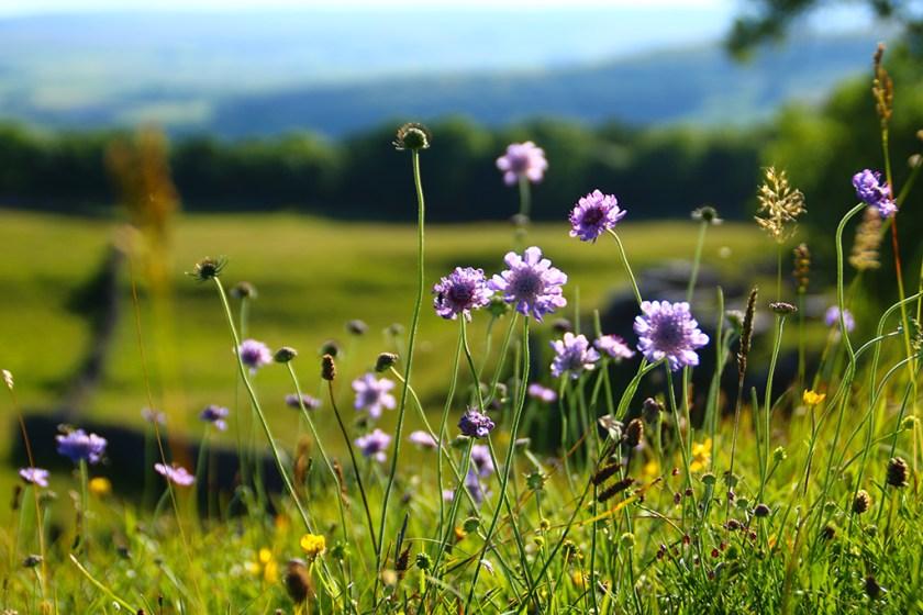 dales flowersclose