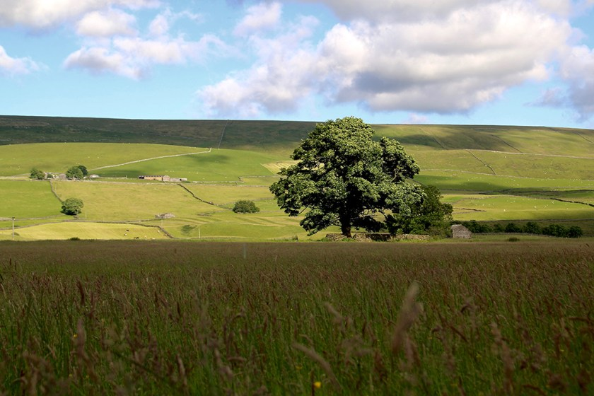 Ribblesdale peace