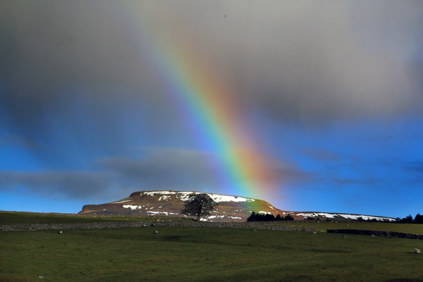 Dales rainbowingle
