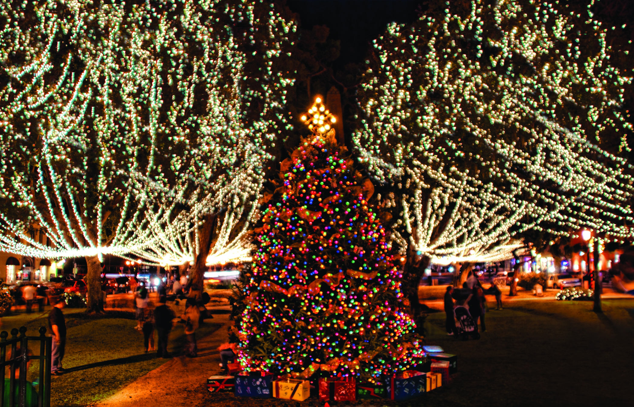 How to extend the age of a lively Christmas tree