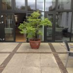 Holy Trinity Hospice, Clapham, Open Garden
