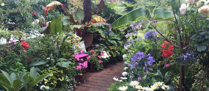 35 Turret Grove Open Garden