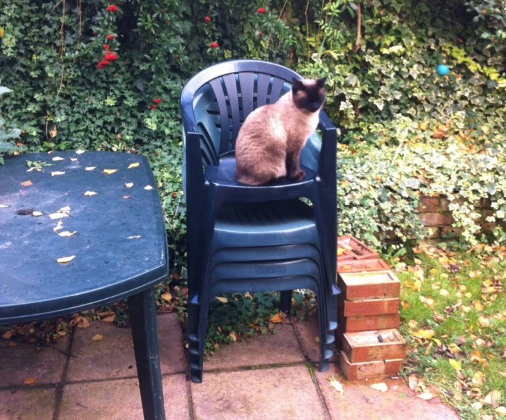 Rumbles modelling the garden back in November 2012