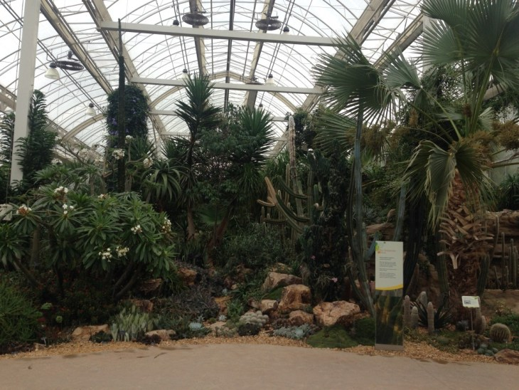 Inside RHS Wisley's main glass house, full of a huge variety of species. Personally I am extremely glad that their cacti look healthy and vibrant. I've been disappointed in recent years by Kew Gardens' cacti display that seem to have lost the love being put into it...