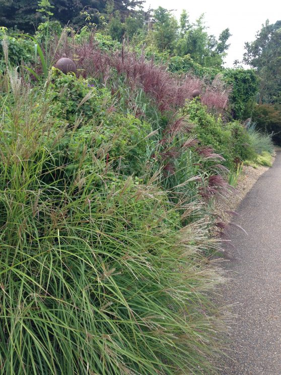 Grass borders - RHS Wisley September 2014