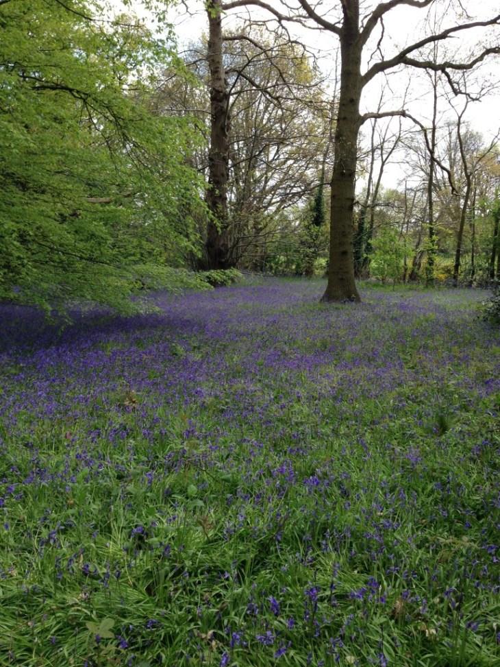 Kew Gardens spring 2014