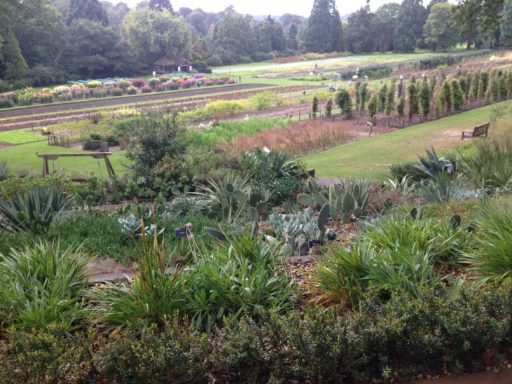 RHS trials field at Wisley, where all the best plants are selected and rubber stamped