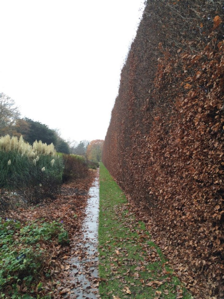 The largest Fagus sylvatica hedge I think Im likely to see