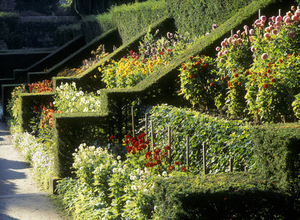 Victorian Plantsman, James Bateman, Created This Incredible Scientific And  Showy Dahlia Walk At Biddulph