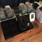 Avoid damping off during indoor propagation