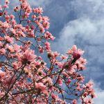RHS Wisley in spring