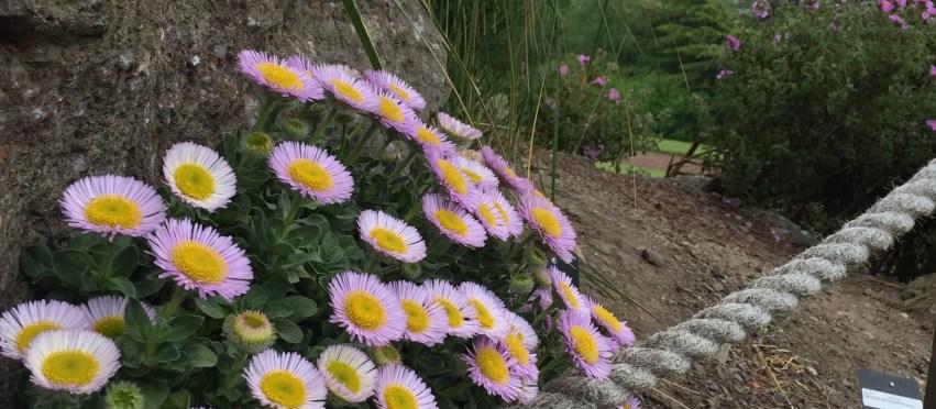 Royal Botanic Gardens Edinburgh in early summer