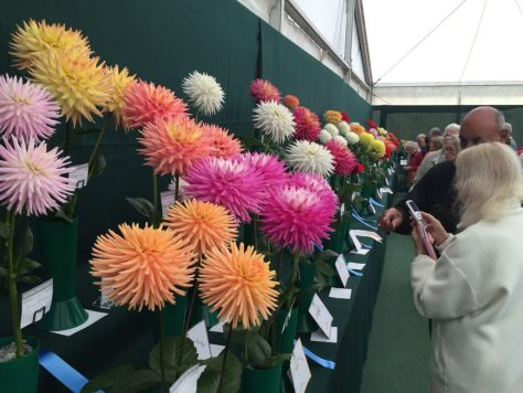 national-dahlia-collection-rhs-wisley-201519