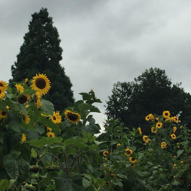 rhs-wisley-september-flower-show09