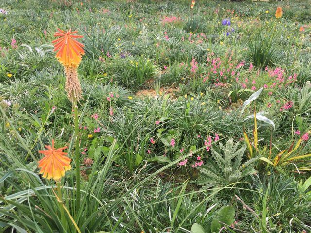 Grasses jack wallington garden design clapham in london rhs wisley sept 2015 workwithnaturefo
