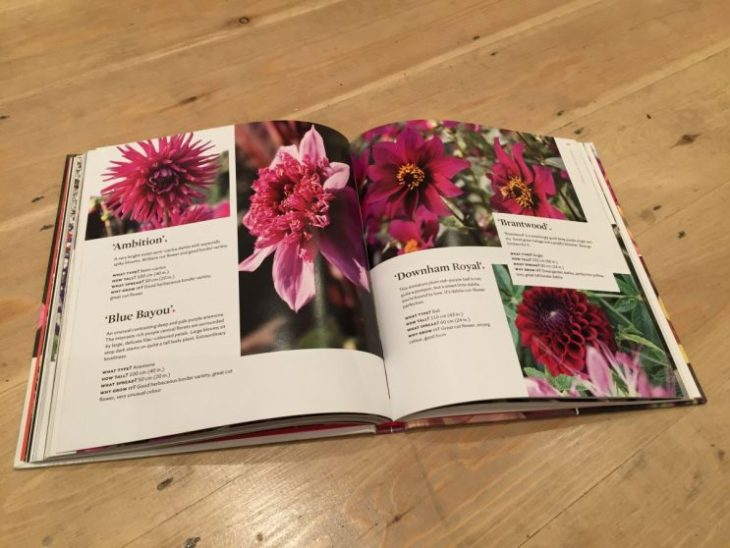 Plant Lover's Guide to Dahlias