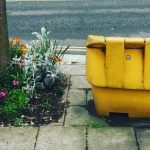 11 Realities of Gardening in London
