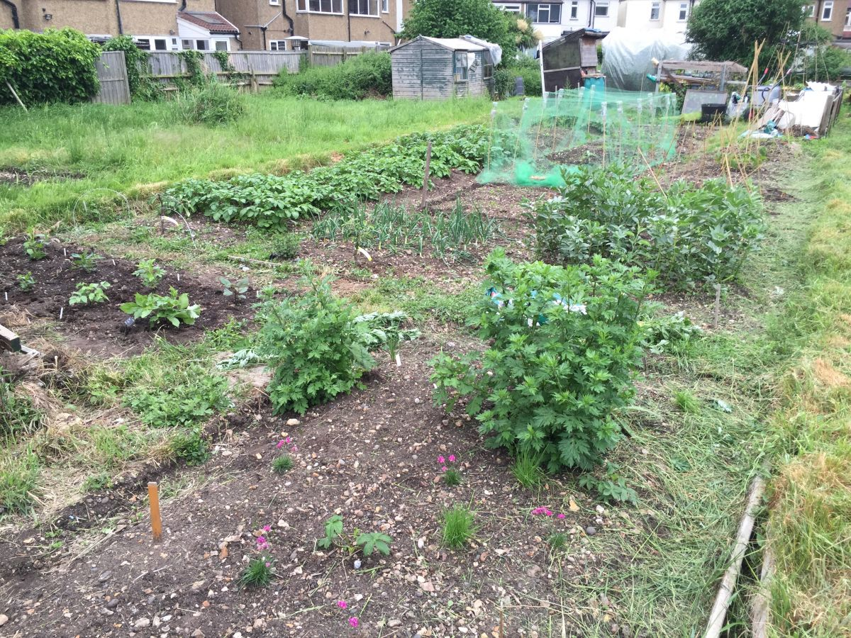 13 Tips To Help Allotment Newbies By An Allotment Newbie Jack