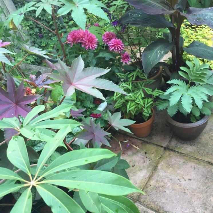 Raised and grown in pots of peat free compost