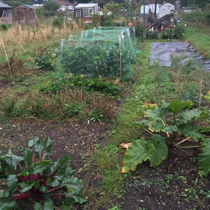 Jack Wallington allotment