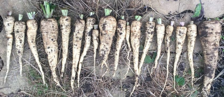 Allotment Month 11: jobs for Autumn