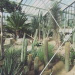 Cacti in the Princess of Wales Conservatory, Kew