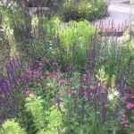 15 sensational plant combinations you can try at home from the RHS Chelsea Flower Show 2017