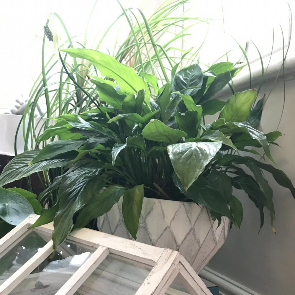 My 6 Easy Care Comfort House Plants You Thought Were Boring But Are