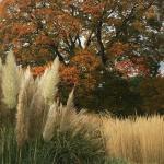 Oh Autumn!