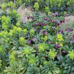 From the streets: Nine Elms Lane, Vauxhall urban planting