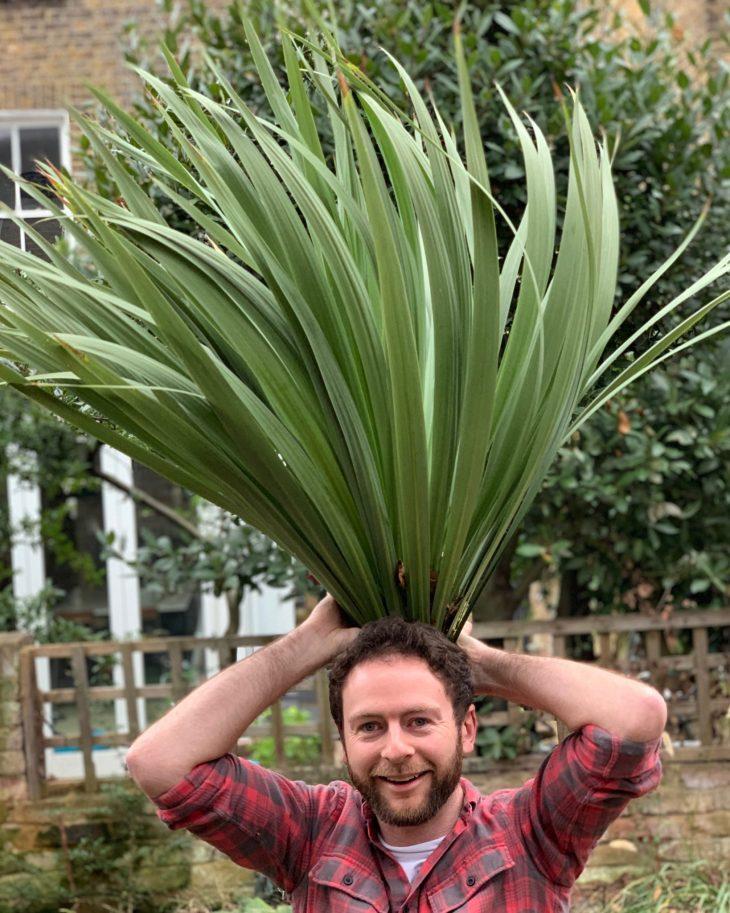 How To Prune A Cordyline Australis Jack Wallington Garden Design Ltd Clapham In London