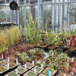 From plant to seed bank, how Kew Gardens is saving the planet's flora and us