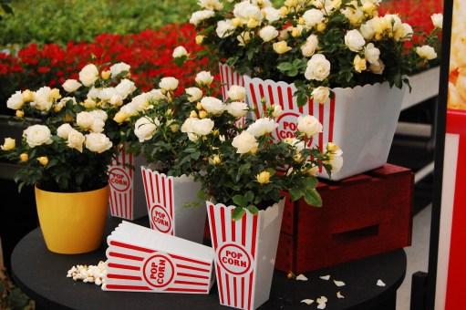 Popcorn DRIFT® Novarospop
