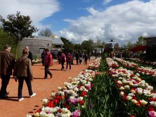 Les Printemps de Terra - Terra Botanica - Angers - 2