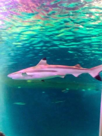 Haifisch im Sea Life Oberhausen