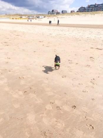 Hund am Strand