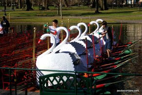 Swan boats preparing for the season opener.
